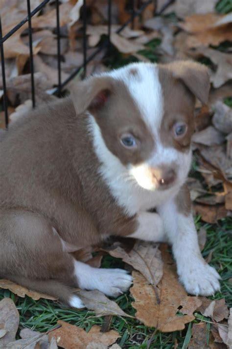 otis massachusetts dog shelters part    lost hunter