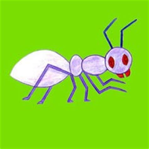 draw insects easy step  step drawing tips  kids