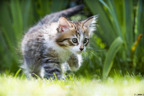 chat on timon petit chat chaton tigre mignon herbes portraits joli