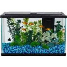 Betta Kits, Tanks and Supplies on Pinterest   Aquarium, Starter Kit