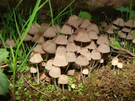 funghi giardino determinazione funghi in giardino forum natura