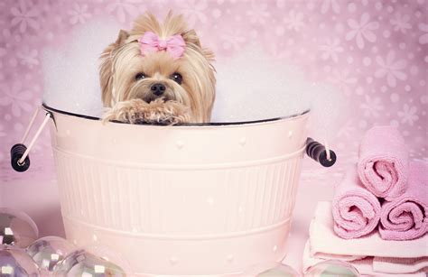 puppy tubs puppy pink tub paw luxury pet hotel spa