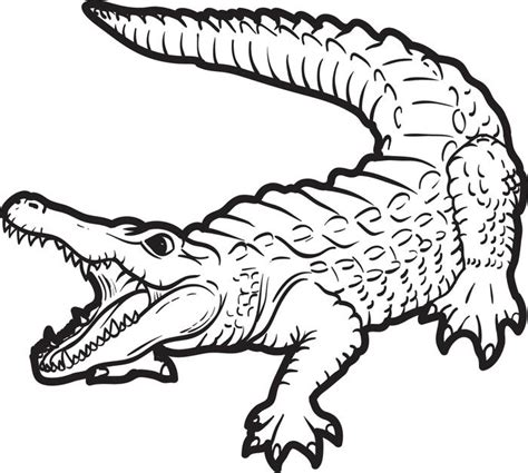 alligator coloring page free printable alligator coloring page for 2