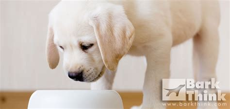 do puppies need puppy food how much food does your need bark think