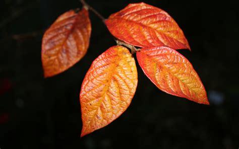 Rote Blätter Baum 4770 by Orange Bl 228 Tter Hintergrundbilder Orange Bl 228 Tter Fotos