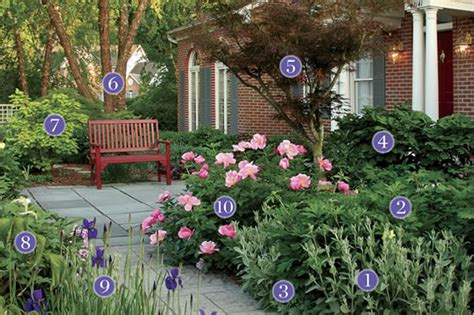 plant for front yard plants for an inviting front yard pathway plant