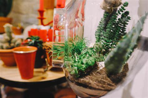 interflora siege social le cactus 224 id 233 es d 233 coration cadeaux et bien plus