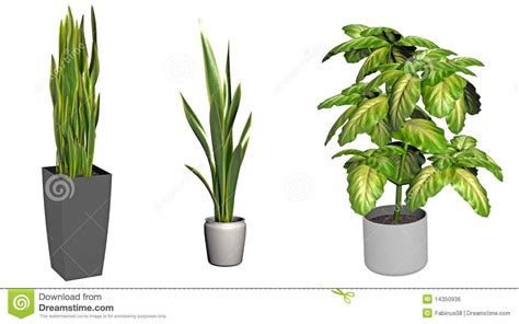 pot plant clipart tall pencil and in color pot plant clipart tall
