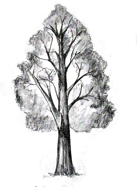 how to draw a tree tutorial drawing painting how to