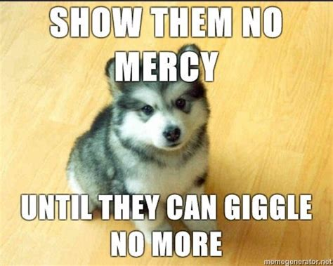 Cute Puppy Meme - ridiculously funny animal memes for 2013 animals zone