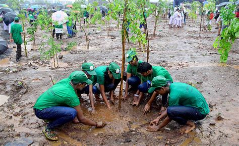 tree in tree plantation sahabhag government of maharashtra