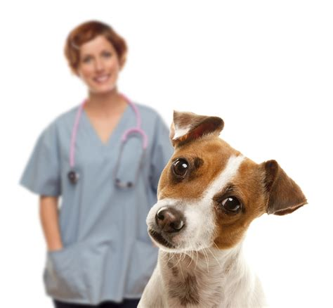 puppy vet companion consultancy pr marketing for the veterinary sector