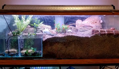 changed   tank hermitcrabs