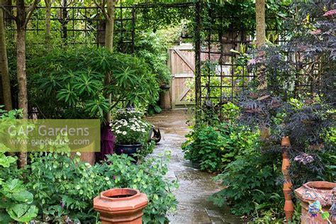 Small Metal Trellis Gap Gardens A Small Town Garden With Metal Trellis