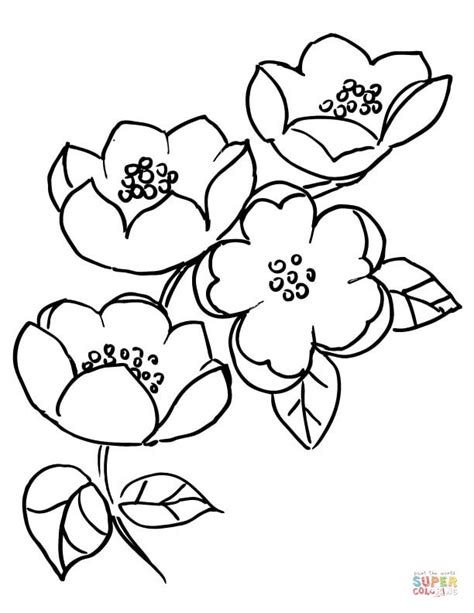 apple blossom branch coloring page free printable