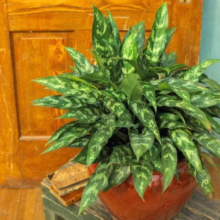 easiest indoor plants 20 super easy houseplants you ll love midwest living