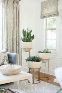 Living Room Plants by 25 Best Ideas About Living Room Plants On Pinterest