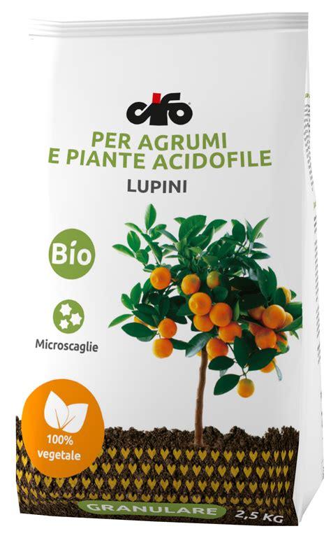 concime per limone in vaso concime granulare per agrumi e piante acidofile cifo