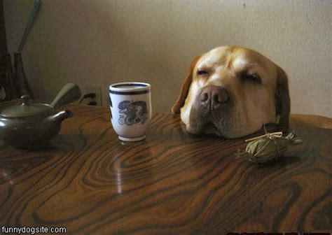 dogs and coffee pictures cat ate barking stopped cats and dogs pics breeds picture