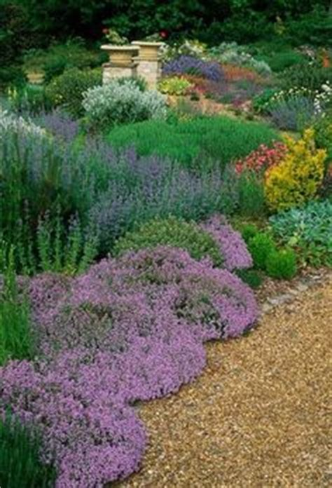 backyard ground cover ideas blood grass river through creeping thyme ornamental