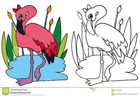 Pink Flamingo Color And Bw Stock Illustration Image Of