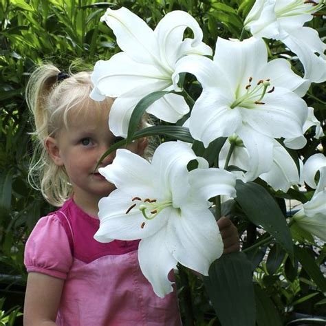 17 best ideas about white lilies on lilies 17 best ideas about white flower on white
