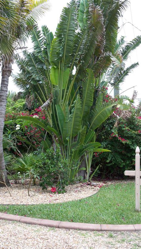 white bird  paradise  tropical garden tropical