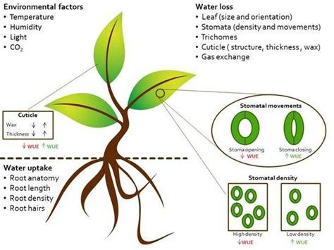Open Tge Cuticle And Detox by Horticulturae Free Text Improving Plant Water Use