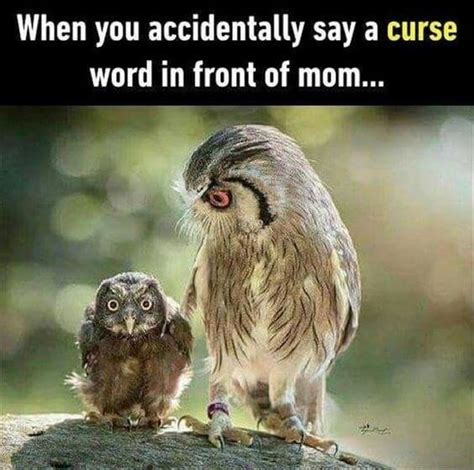 Owl Birthday Meme - 29 funny owl memes that are so funny they re actually a hoot