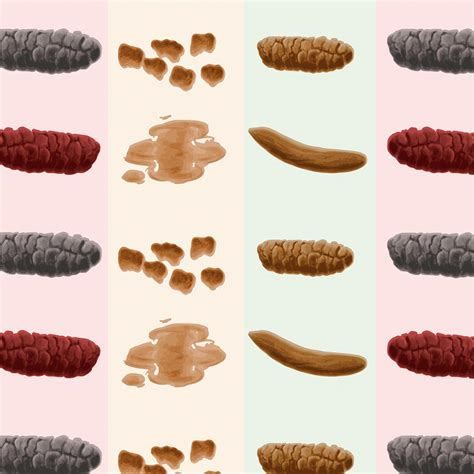 Stool Bowel Movement by How Your Poo Could Reveal A Lot About Your Health