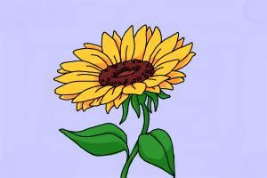 How To Draw Sunflowers In A Vase by How To Draw Flowers In A Vase Drawingnow