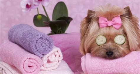 happy puppy pet spa pet grooming huddersfield av purrfect pets home av purrfect pets