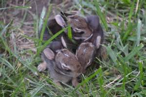 baby bunnies in my backyard backyard holes animals 2017 2018 best cars reviews