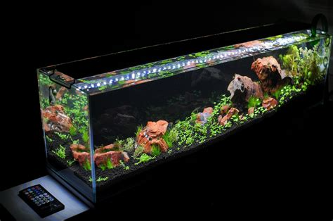 aquascape aquarium lighting images