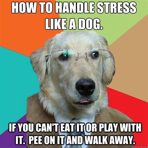 Stress Meme - how to handle stress like a dog if you can t eat it or