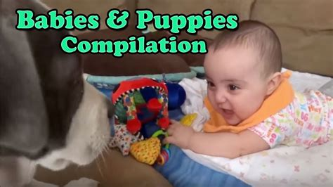 cute dogs and adorable babies compilation youtube cute babies and funny dogs compilation d youtube