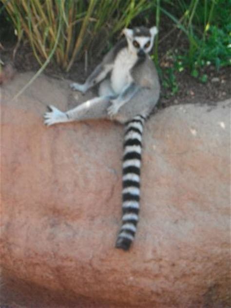 zoom cumiana prezzi ingresso un lemure stanco foto di zoom torino cumiana