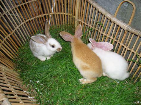 Harga Makanan Kelinci Anggora makanan kelinci yang baik ragam informasi