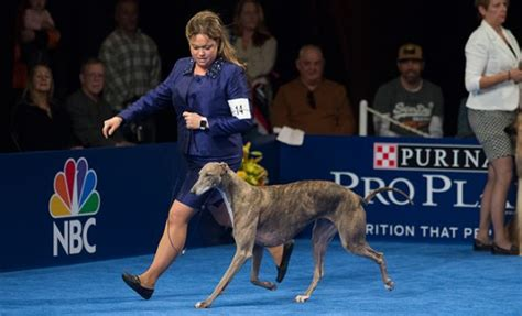 purina show 2017 dug up at dogster don t miss these november 2017 events