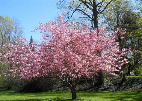 o fruitier aubonne 193 rbol de magnolia rosa arkiplus