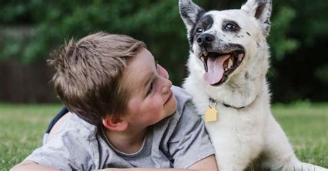 can dogs be autistic can dogs be autistic some symptoms to diagnose it thepetadvice