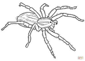 Carolina Wolf Spider Coloring Page Free Printable Spiders Coloring Pages