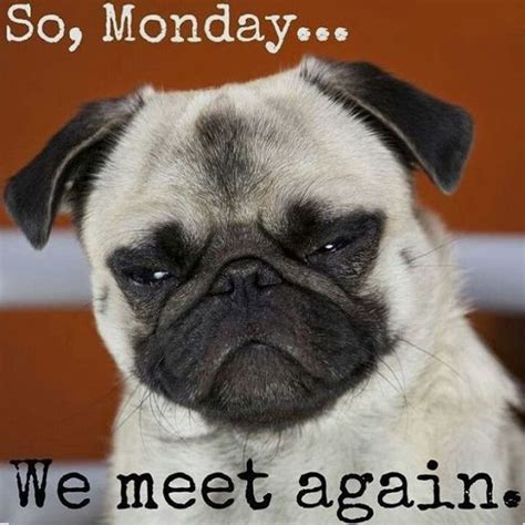 Monday Meme Images - 60 monday memes funny monday work memes
