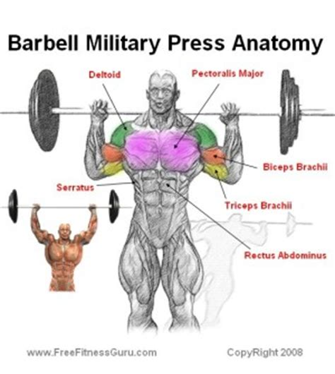 what muscles do you use for bench press overhead barbell press muscles stiff leg deadlifts with dumbbells