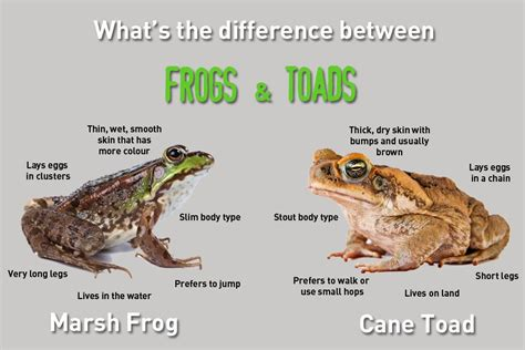 what is the difference between a and a sofa seed to feed me what is the difference between a frog and