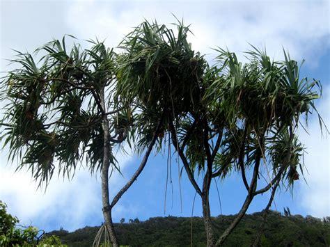 the indigenous trees of the hawaiian islands classic reprint books experience hawaii enjoy honolulu festival