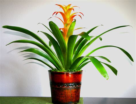 best indoor flowers indoor flowering plants best tropical dma homes 4937