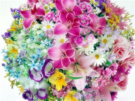 desktop wallpaper in flowers desktop flowers flowers wallpapers