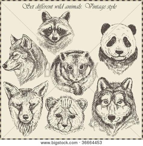 imagenes vintage animales vectores y fotos en stock de conjunto de vectores