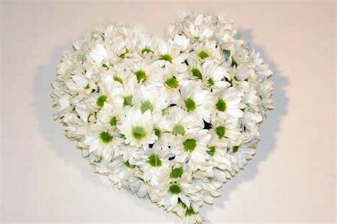 fiori simbologia fiori primaverili simbologia e idee di utilizzo by